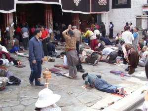 k9_Tibet_1