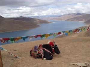 k9_Tibet_19