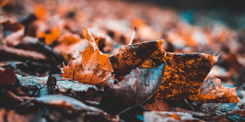 Herbst hoch zwei